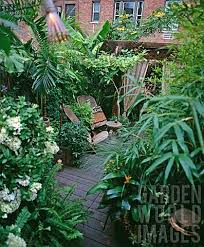 jungle gardens tropical backyard