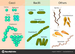 Bacteria Classification Types Of Bacterial Bacteria Different Forms Of Bacteria