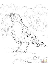 American Crow Coloring Page Realistic Birds American Crow Bird
