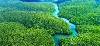 amazon rainforest. Interesting Rainforest 30 Amazon Rainforest Characteristics Facts For Your Homework On K