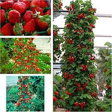 Walden Heights Nursery Organic Fruit Trees And Berries From VermontNon Gmo Fruit Trees For Sale