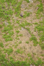 dirt grass texture seamless. Grass And Ground Texture Dirt Seamless