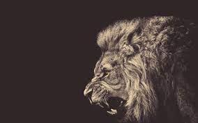 570423 lion wallpaper free download ...
