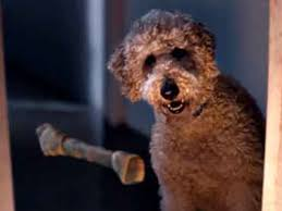 Filming location for the brand new 'churchill' advert was filmed with a new cgi churchill dog in madrid, spain. Amazon Advert Dog 2019