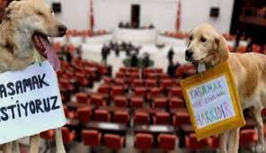 Ankara Barosu Hayvan Hakları Merkezi üyesi avukat Gürsoy: Hayvanları Koruma  Kanunu yetersiz - Haber Buketi