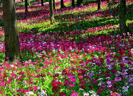 Small Picture Beautiful Garden Hd Wallpapers Multi Colored Flower Garden Tree
