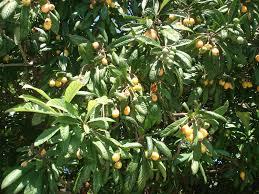 Tree With Orange Fruits Stock Images  Image 17431024Small Orange Fruit On Tree
