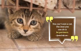 Cat Quotes Custom Cat Is Best Friend Cat Sayings QuotesCraft