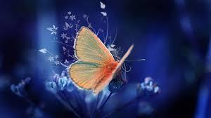 Wonderful orange butterfly on a beautiful flower -art design Wallpaper  Download 3840x2160