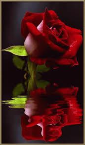 La rose à 10 - Page 2 Images?q=tbn:ANd9GcR23wsvUq6Zqf_J0NVSLeqqjrTnlZD7nqD7SC-OoKsTjpkX6gTt