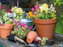 Image result for potted garden