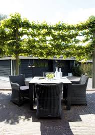 keep prying eyes privacy patio with plants interior design ideas patio plants for privacy