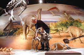 A Museum Technician Positions The Skeleton Of A Protoceratops In