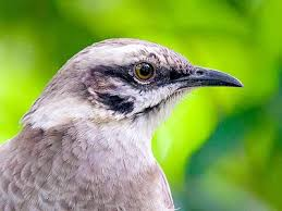 Image result for Mockingbird Jigsaw Puzzle