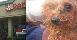 huge pet chain selling puppies from worst conditions imaginable the dodo