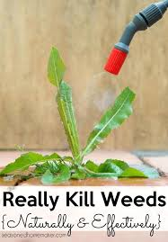 how to get rid of weeds in garden. Grass Killer For Vegetable Gardens Learn How To Get Rid Of Weeds Naturally And Effectively I See All Types Weed Safe Use In Garden