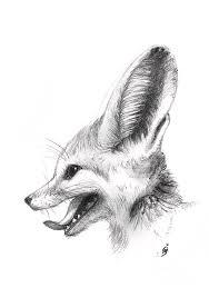 fennec fox drawing. Brilliant Fox Fox Drawing  Fennec By Martina Seketa And T
