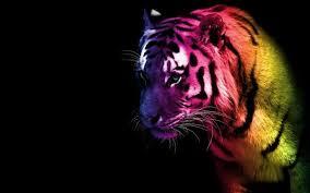 rainbow animal wallpaper. Unique Wallpaper Rainbow Flaming Lion Wallpaper  Tiger By Fire Nekoyasha D37k1gu  Inside Animal A
