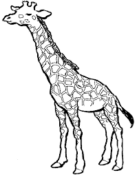 Small Picture SIMPLE GIRAFFE OUTLINE you to paint a picture giraffe this
