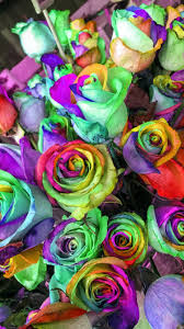 Rainbow Roses Wallpaper Phone ...