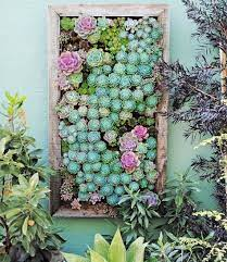 succulent vertical garden succulent