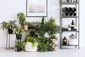 Sapete quali sono le piante resistenti al freddo? 5 Piante Da Interni Che Non Hanno Bisogno Di Luce Per Una Casa Piu Green E Chic Unadonna