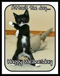Happy Wednesday Meme