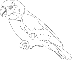 Coloring Page of Parrot For Kids parrot outline pictures to pin on pinterest pinsdaddy on parrot outline template