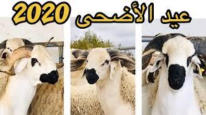 🔴 حصريا عملية ترقيم اضاحي العيد 🐏⚔️ عند الكساب خليل التي سيتم عرضها للبيع  - ✨عيد الأضحى 2020🌹 - YouTube
