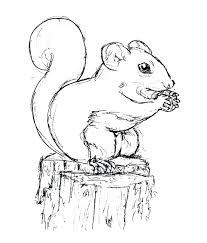 Coloring Pages Squirrel Coloring Page Squirrel Coloring Pages