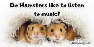 do hamsters like hamster