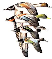 The Project Gutenberg Ebook Of Ducks At A Distance By