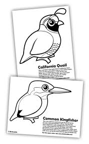 Small Picture Quail and Kingfisher Coloring Pages in Free Downloads Coloring Pages