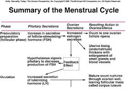 Womens Monthly Hormonal Cycle Chart Menstrual Cycle