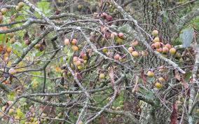 Best Fruit Trees To Plant For Deer  Grand View OutdoorsBest Fruit Trees For Deer