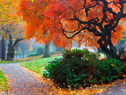 shade trees for small landscapes