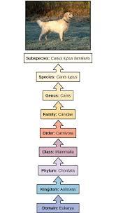 Taxonomy Biology For Majors Ii