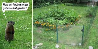 how to keep groundhogs out of my garden. Beautiful Keep Throughout How To Keep Groundhogs Out Of My Garden