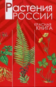 Красная книга доклад сообщение природоведение и окружающий мир лук алтайский и крупный красная книга России растения доклад