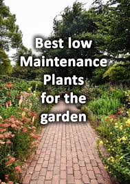 50 low maintenance plants for busy