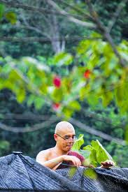 Free Images : tree, nature, forest, sunlight, leaf, flower, spring, green,  jungle, autumn, season, rainforest, service, bhikkhu, theravada monk, monk  at work, buddhist monk, bhante, perform merits, theravada buddhist  2848x4272 - -