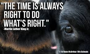 Animal Rights Quotes Beauteous Animal Rights Quotes And Slogans On QuotesTopics