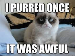 grumpy cat i had a birthday once.  Grumpy In Grumpy Cat I Had A Birthday Once T