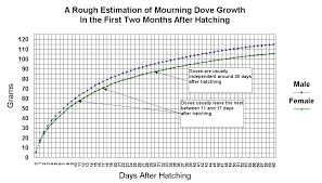 Mourning Dove Age Chart Mourning Doves Diamond Dove Home Page