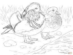 Small Picture duck coloring pages easy Archives Printable Coloring page for kids