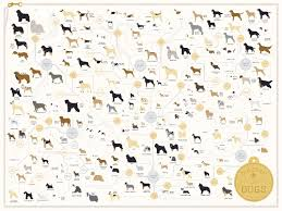 Kinds Of Dogs Chart The Diagram Of Dogs A Dog Breed Infographic Poster By Pop