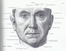 face anatomy facial surface landmarks facial anatomy pinterest facial