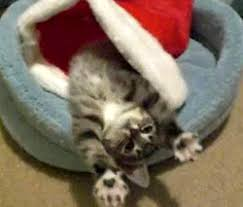 Image result for christmas cat stretching