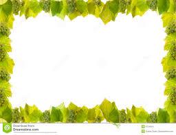 Wine Border Template Grapes And Vine Border Stock Image Image Of Illustration 6754619