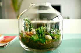 home in low budget with glass planters peanut jar top beauty easy idea for orchids uk india succulents air plants hanging australia indoor glass
